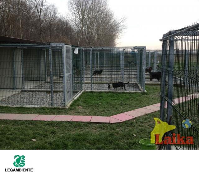 Laika progettazione produzione e vendita di canili box for Box cani prefabbricati prezzi
