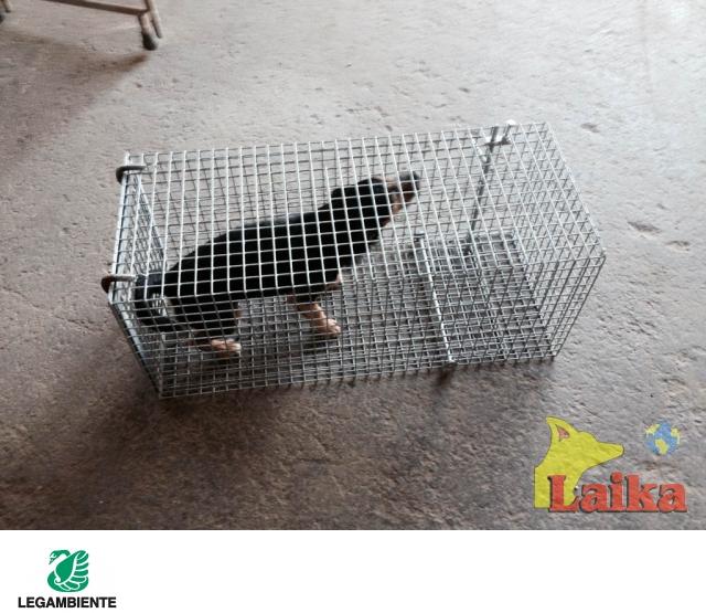 Laika progettazione produzione e vendita di canili box for Box parto cani fai da te